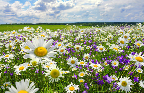 MORENA – vítání jara